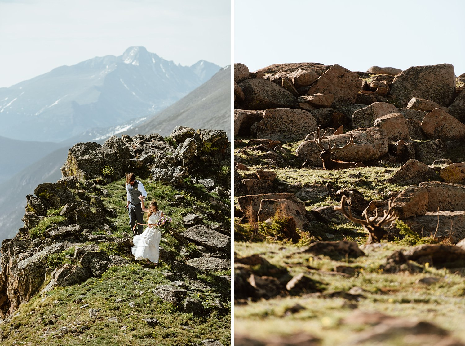 I can't believe the way the elk are just perched on the mountain side where Erin and Graham eloped! So cool! | Elk wedding photos by Colorado RMNP elopement photographer, Maddie Mae.