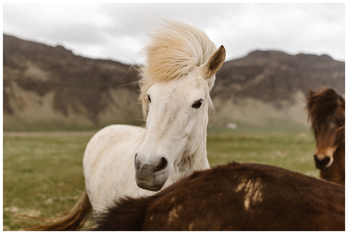 As they headed out to yet another stunning location in Iceland, they came upon some wind ponies, just like the stories you read in books, this intimate elopement couldn't have been more magical. Photos taken by wedding photographer Maddie Mae.