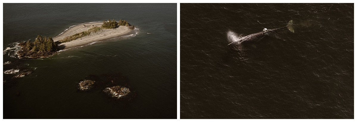 Flying over Cox Bay Kari and Karin were having optimum luck and got to see a breaching gray whale! This adventurous helicopter elopement through Tofino BC was captured by traveling wedding photographer Maddie Mae.