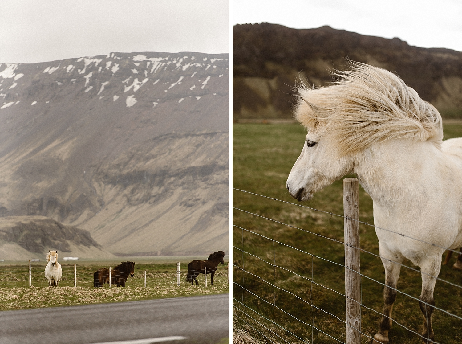 Iceland is filled with all kinds of wildlife. A personal favorite being the fluffy horse all around the hillsides!