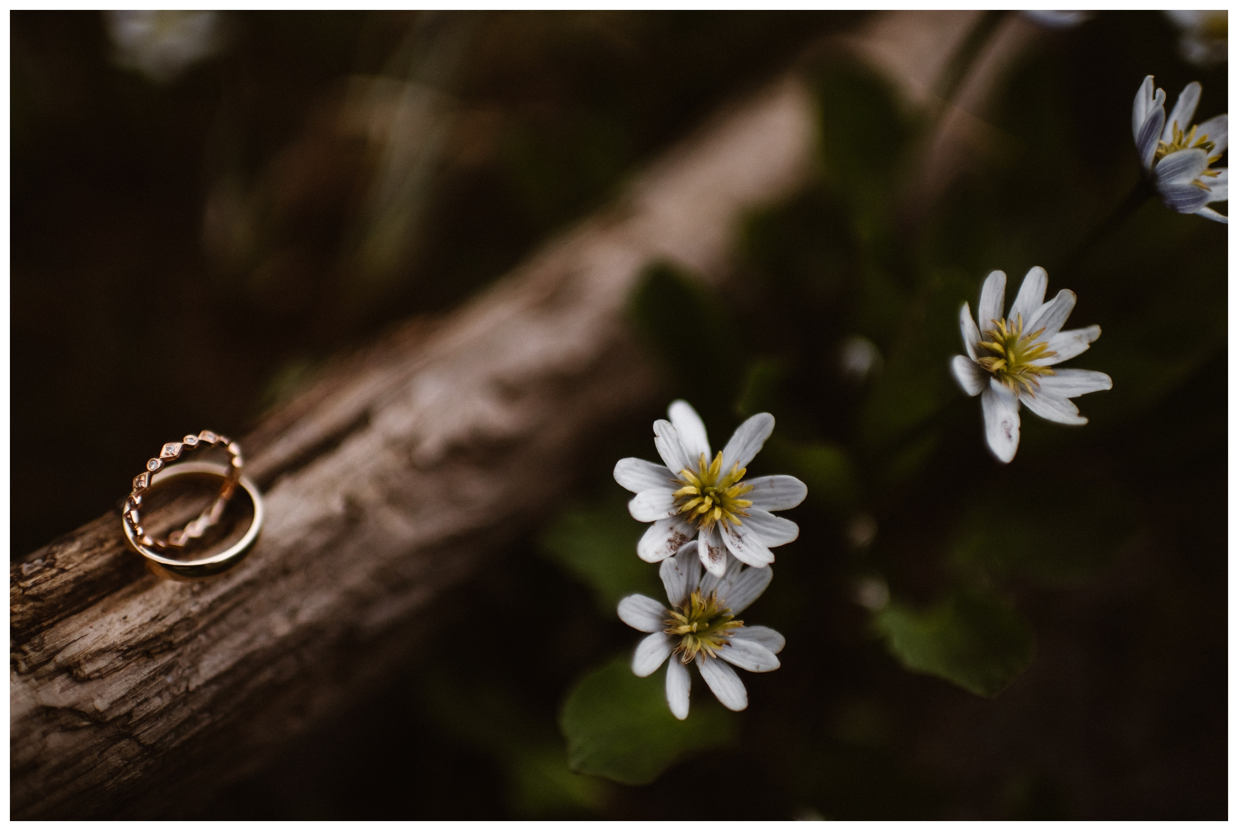 Leslie and Jinson's wedding rings pictured among Colorado wildflowers on the trail to Gem Lake outside of Estes Park Colorado. Photo by Maddie Mae Photo, Adventure Instead.