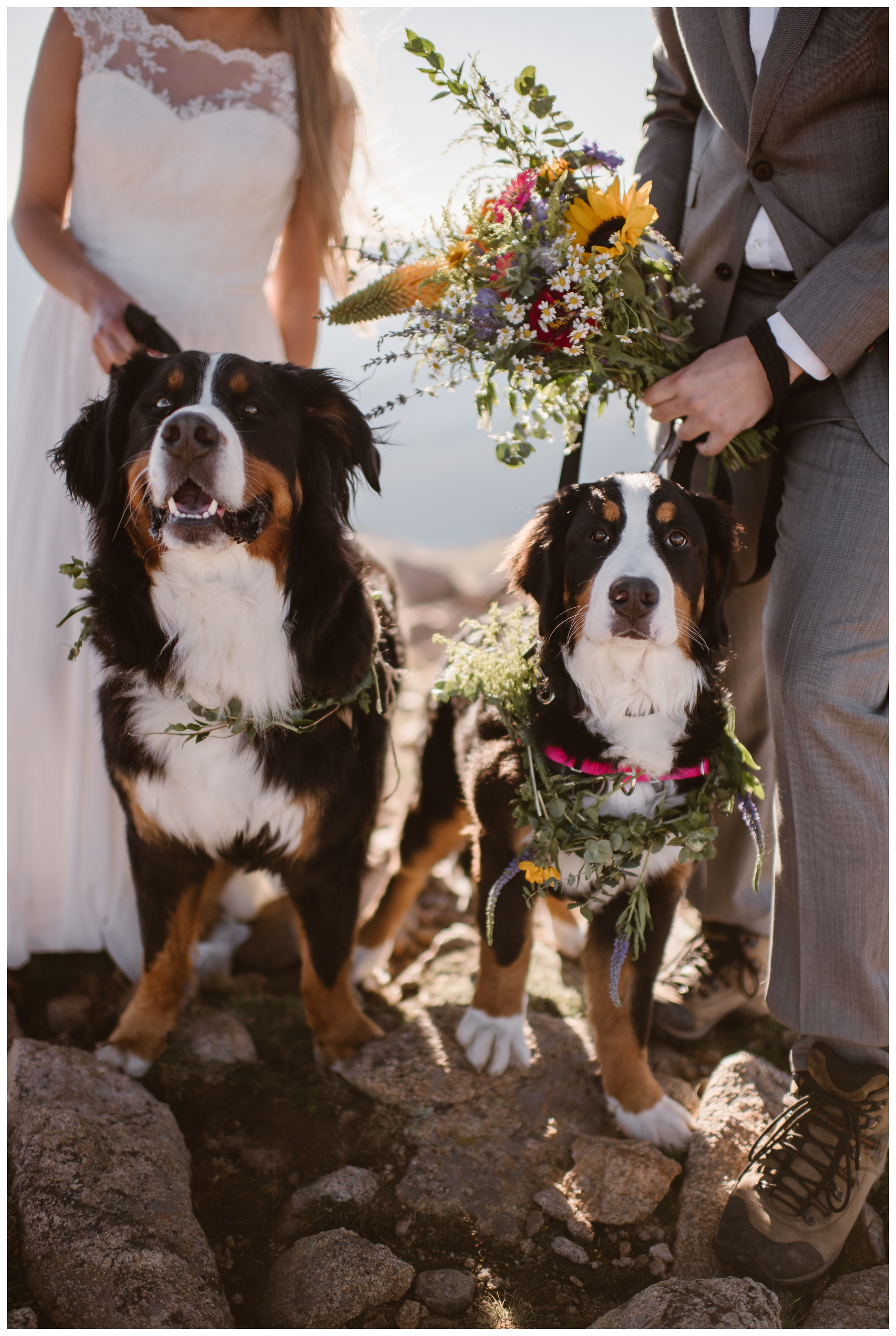 If you want to have your dogs present with you when you elope, make sure your location allows animals. Have a plan for where they'll go during the day if they're not with you the entire time. And maybe let them dress up a little for the occasion too. Where you elope and how you say your vows matters! Photo by Maddie Mae, Adventure Instead Elopement Photographers.