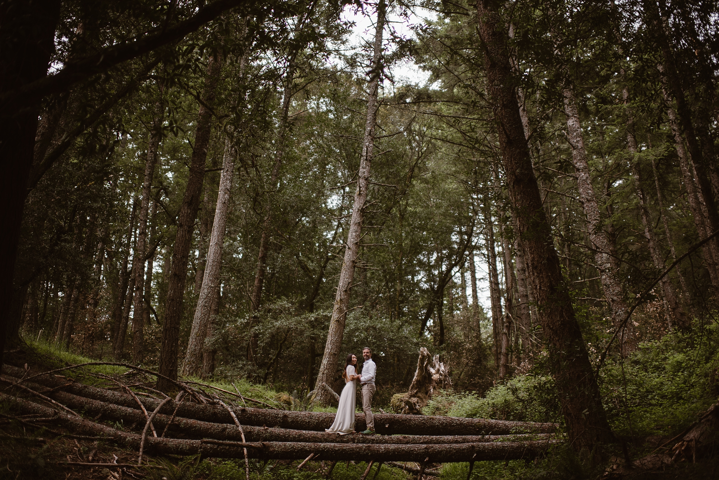 A newly married couple, still in their wedding attire, balance on a few fallen trees laying a few feet above the ground. Enormous green trees surround them in their destination elopement in an old-growth forest in Washington.