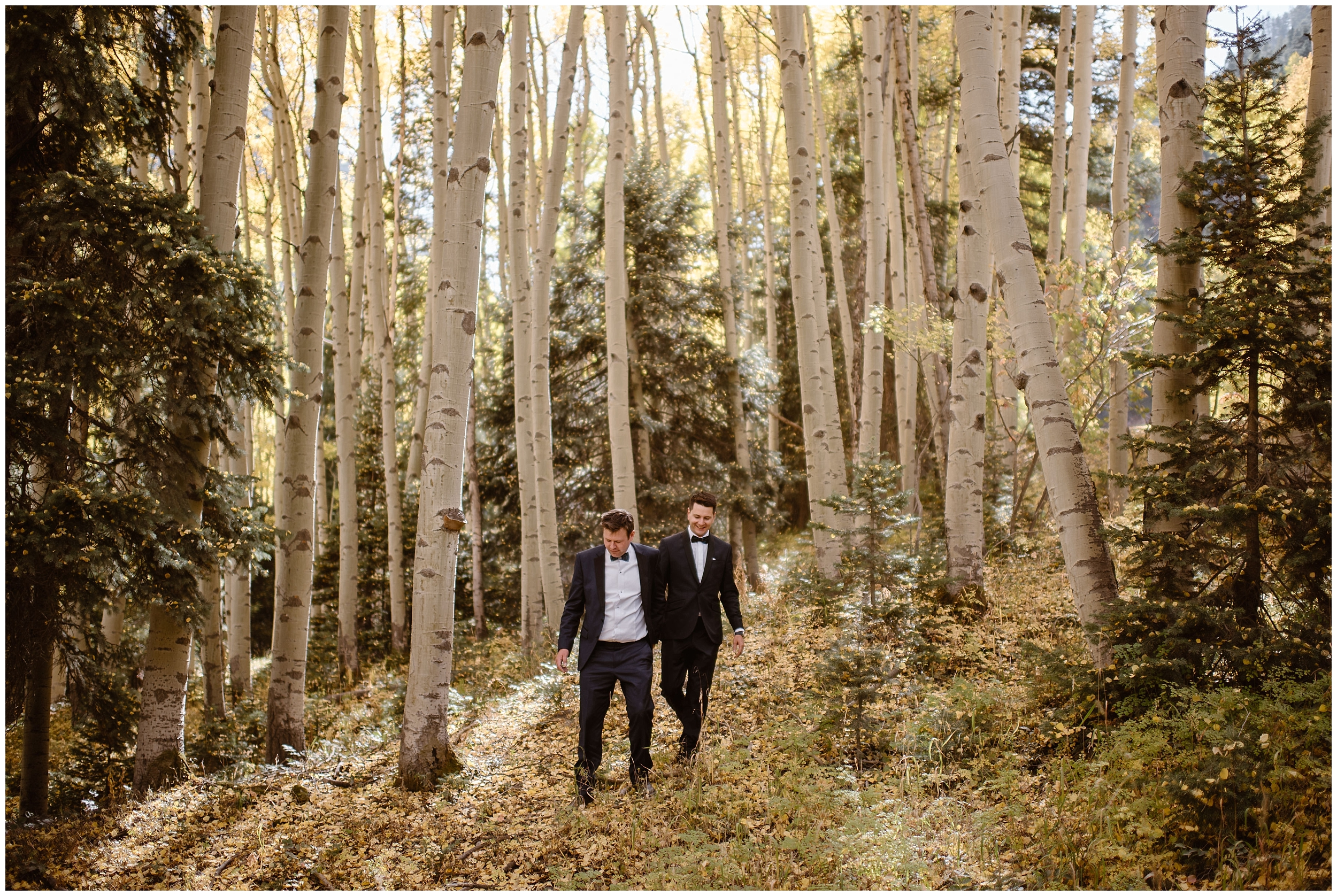 The two grooms walk through a forest littered with golden Fall leaves that have tumbled to the ground. All around them, white aspen trees bloom even more beautiful, golden leaves. As the two take hands, they walk toward their elopement ceremony spot.