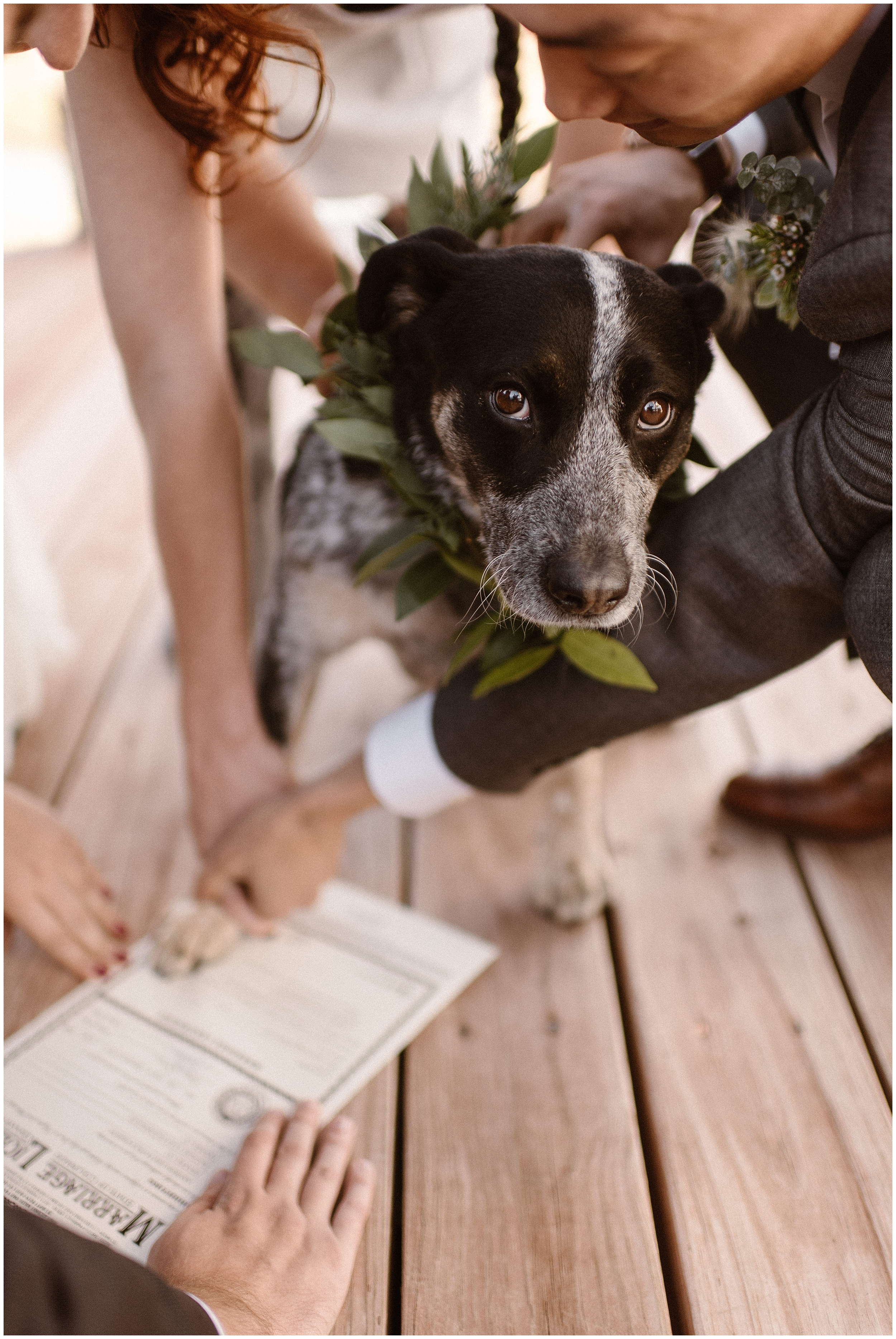 A bride and groom take their dog's paw and press it to their marriage license. In Colorado, you can use your dog as your witness as part of your self-solemnizing elopement ceremony. This is one the best elopement ideas to include in your small simple wedding (when you can).