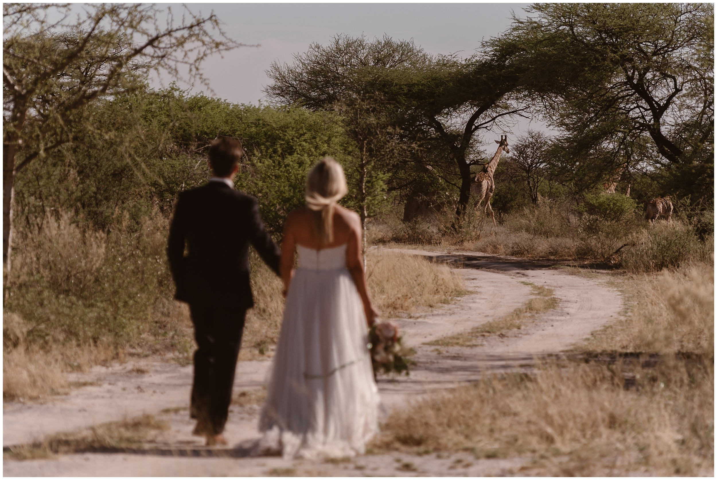 A bride and groom take hands as they walk along a road together in Africa. In the distance, a handful of giraffes can be seen running away. These elopement pictures were captured by Adventure Instead, an elopement wedding photographer.