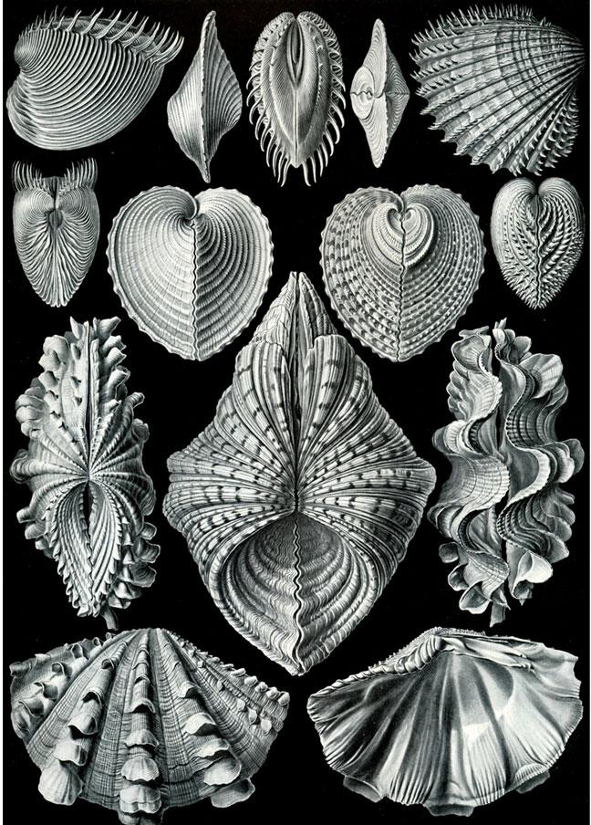 Haeckel_3.jpg