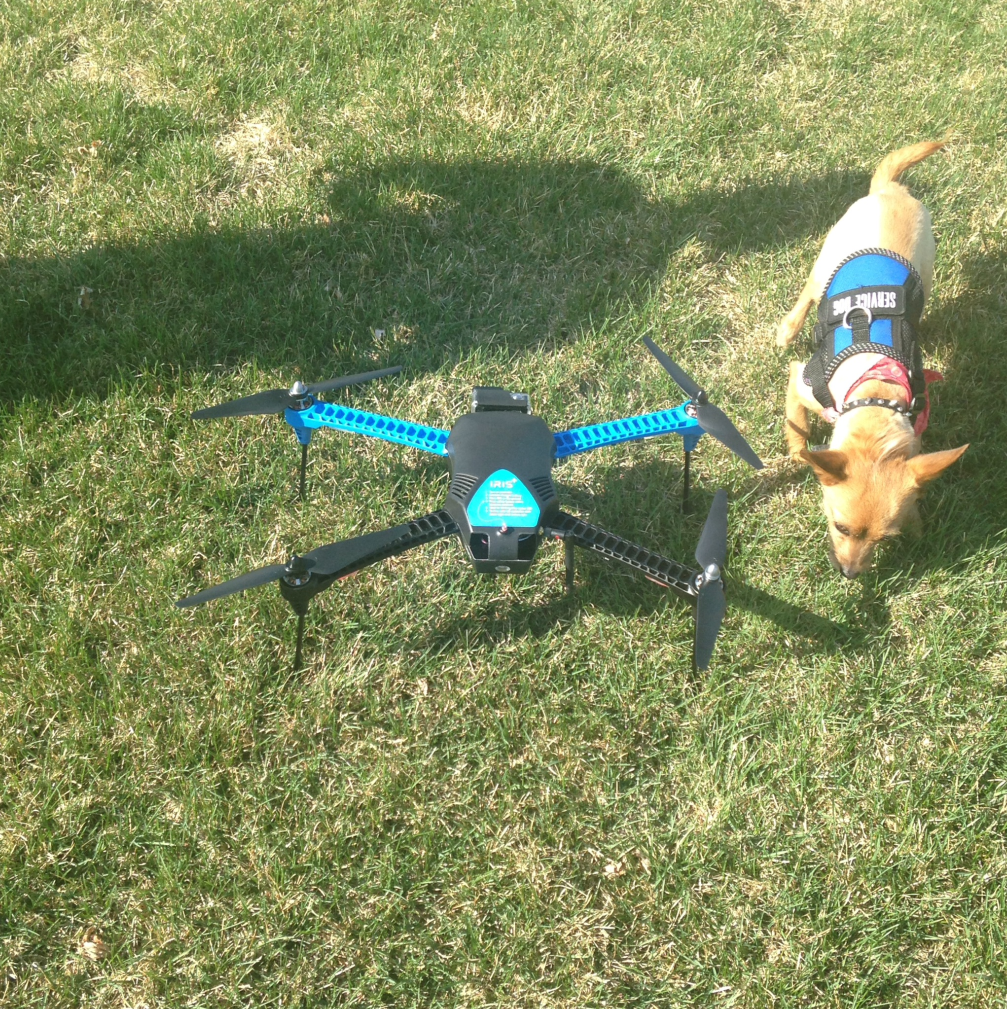 A test flight with the IRIS+ Drone by Berkeley-based 3D Robotics as our safety dog does pre-launch inspections.