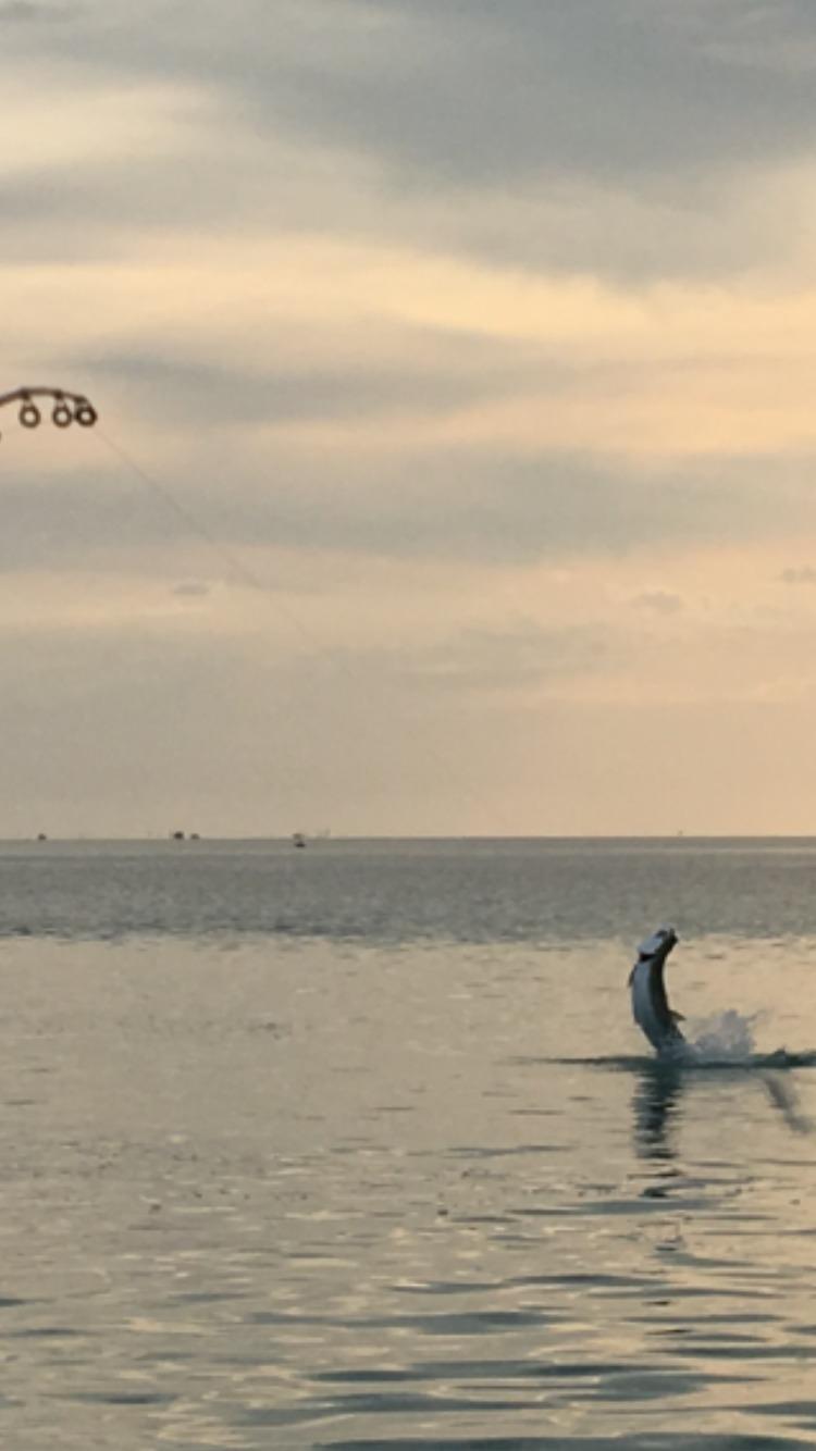 Tarpon Fishing, Islamorada, Florida