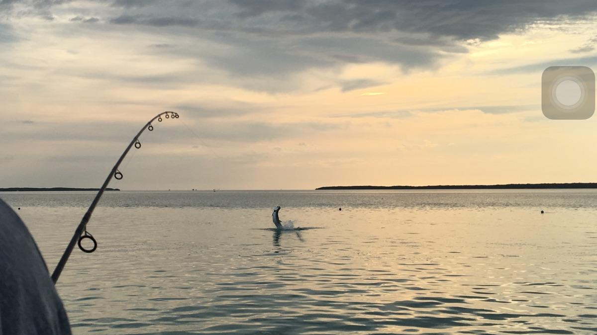 Tarpon Fishing, Capt Tony Horsley