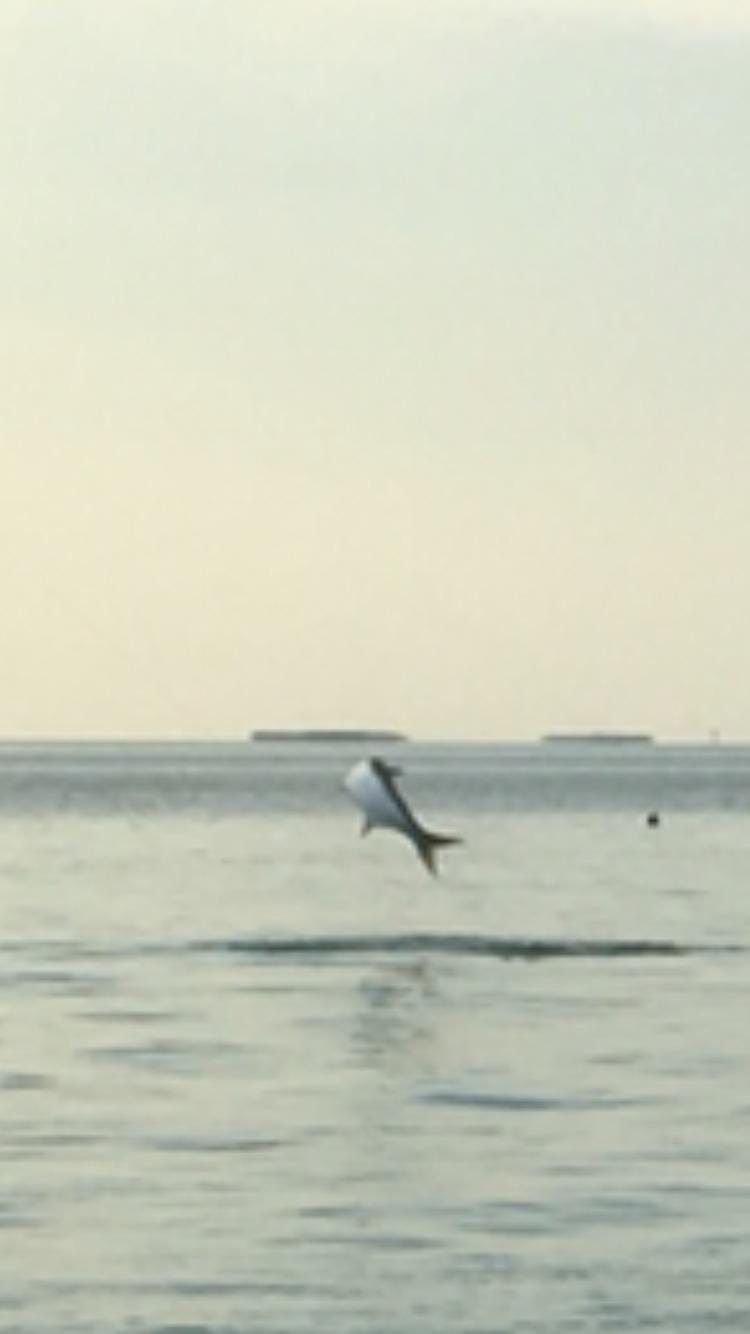 Tarpon Jumping, Upper Keys