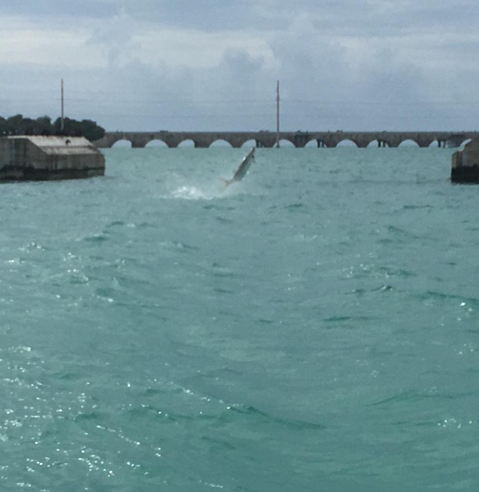 Tarpon, Florida Keys Fishing