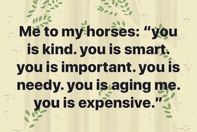 Who else feels this exact same way?! 😂#truelife #imanequestrian . . . #thevineyardequestrian #equestrianapparel #equestrian #equestrians #equestrianlife #equestrianlifestyle #barnlife #barnlifeisthebestlife #summerstyle #horseshowseason #upf #marthasvineyard #marthasvineyardlife