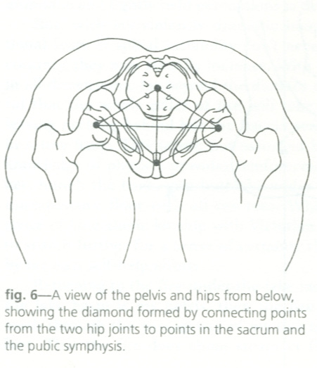 A view of the  pelvic floor.  The crosshairs of the diamond shape meet at the body's conceptual  core . From  Taking Root to Fly