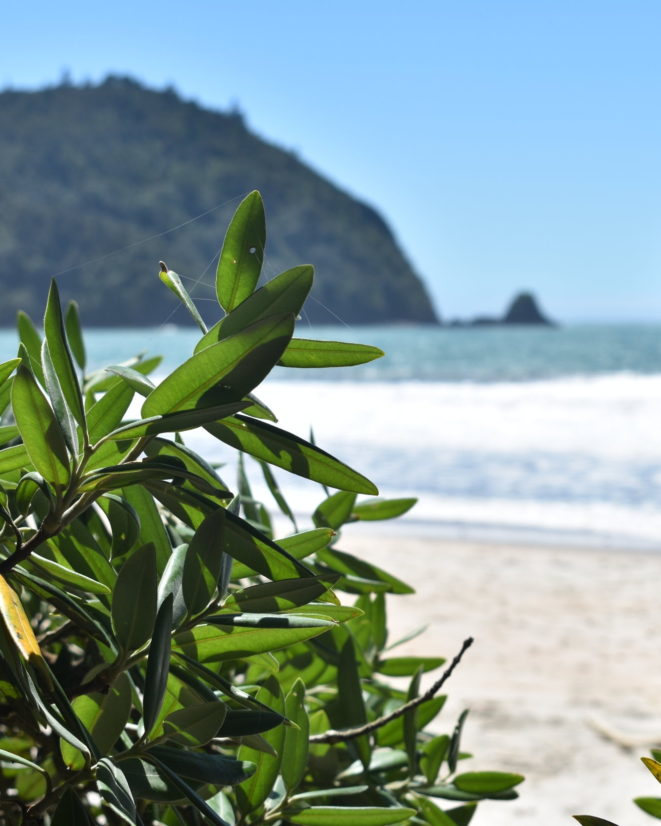 Coromandel Peninsula to Auckland City -