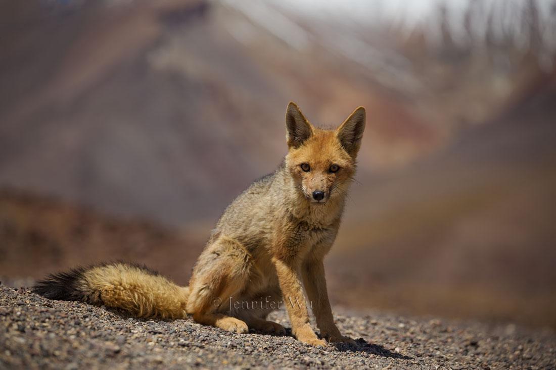 20140213_Atacama_341.jpg
