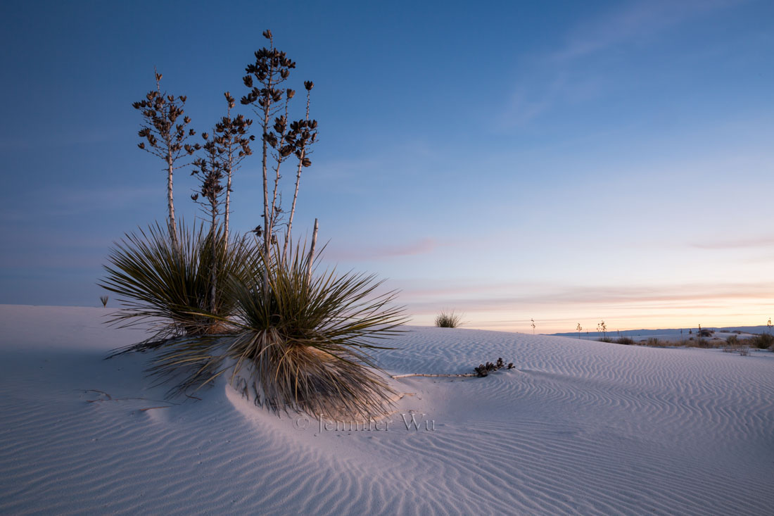 SOAPTREE YUCCA, WHITE SANDS NATIONAL MONUMENT, NM AT TWILIGHT.    F/16, 15 SECONDS, ISO 100,   EF24-70MM F/2.8L II USM AT 24MM.     CANON EOS 5D MARK III