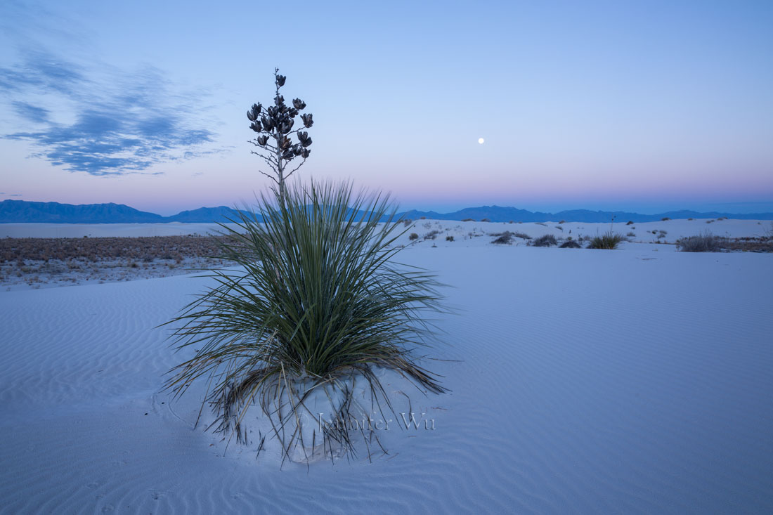 SOAPTREE YUCCA, WHITE SANDS NATIONAL MONUMENT, NM AT TWILIGHT.    F/11, .4 SECONDS, ISO 160, EF24-70MM F/2.8L II USM AT 24MM.   CANON EOS 5D MARK III