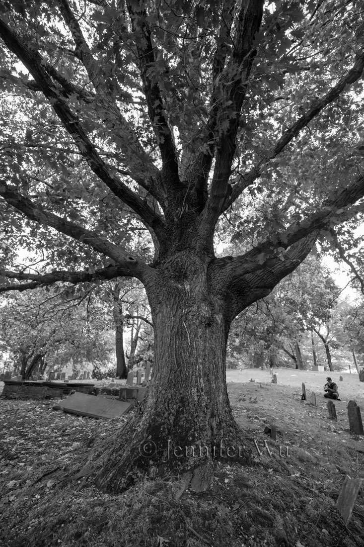 tree at cemetery cemetery