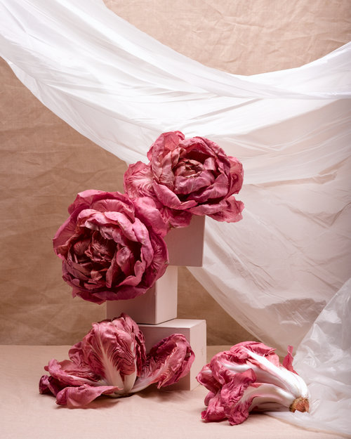 icon-artist-management-patricia-niven-personal-radicchio-and-roses-005.jpg