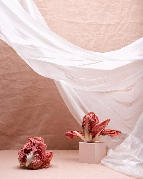 icon-artist-management-patricia-niven-personal-radicchio-and-roses-003.jpg