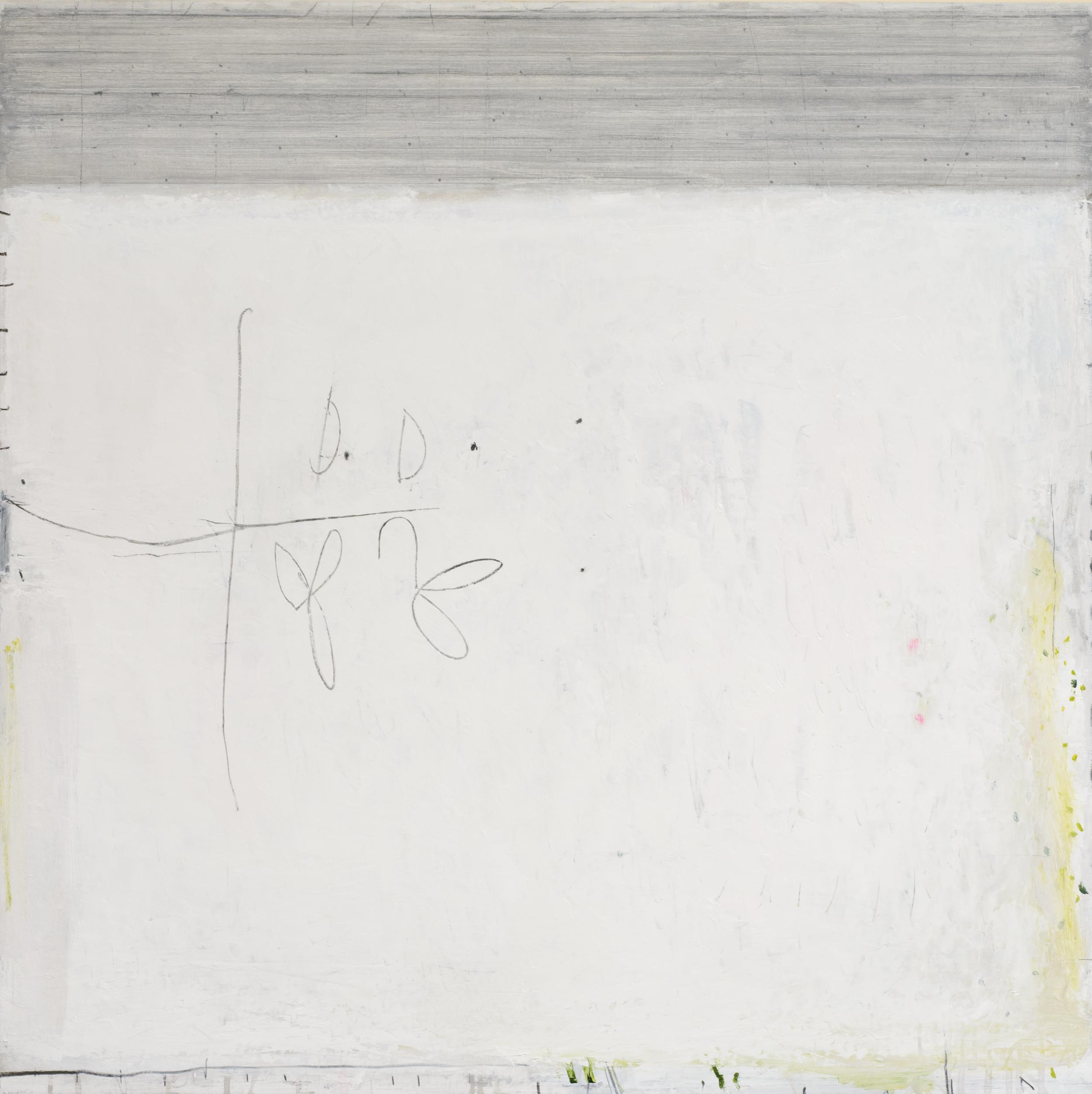 magnolia. oil & graphite on canvas  100 x 100 cm