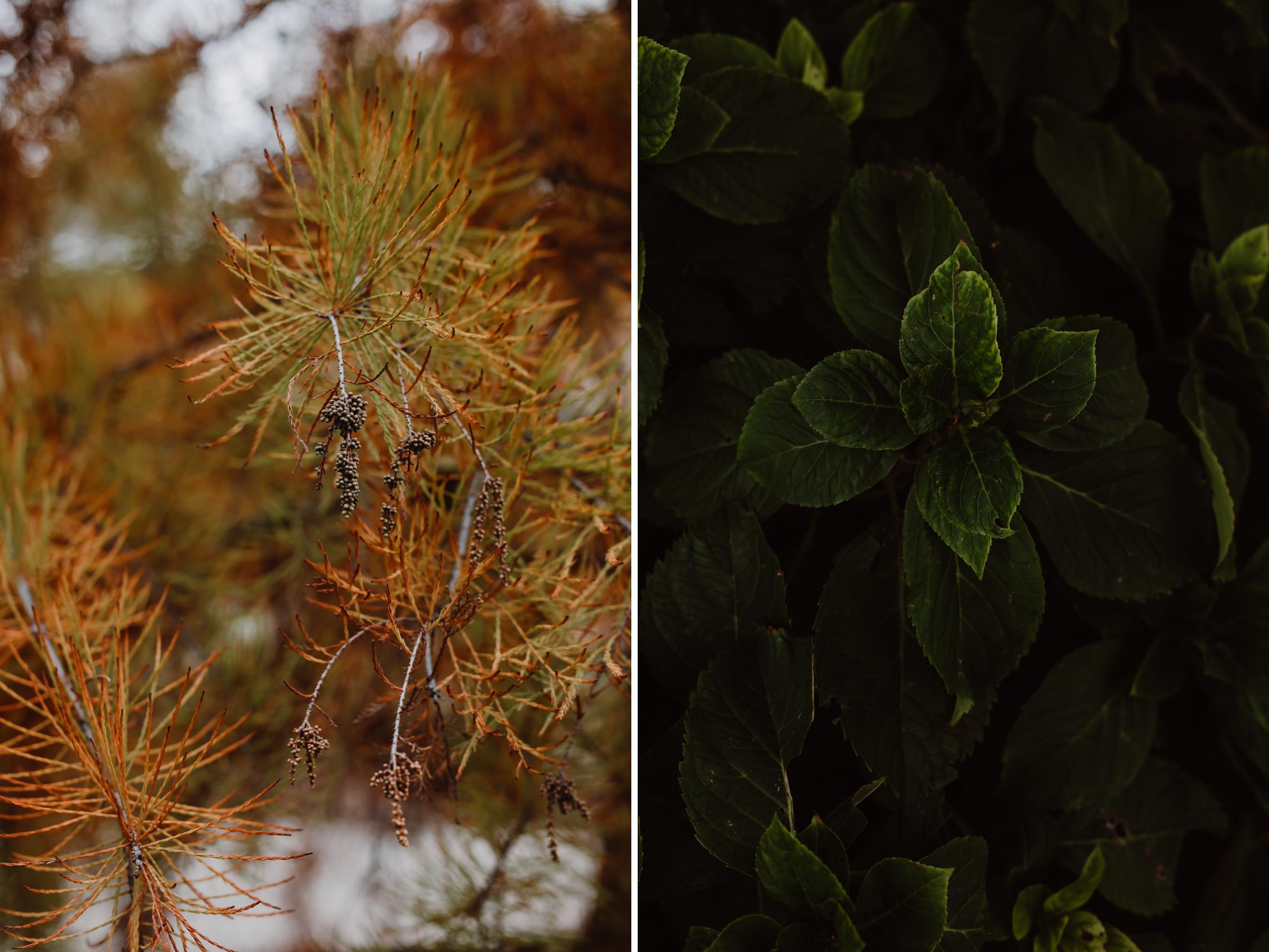 ftworth-botanical-garden-1.jpg