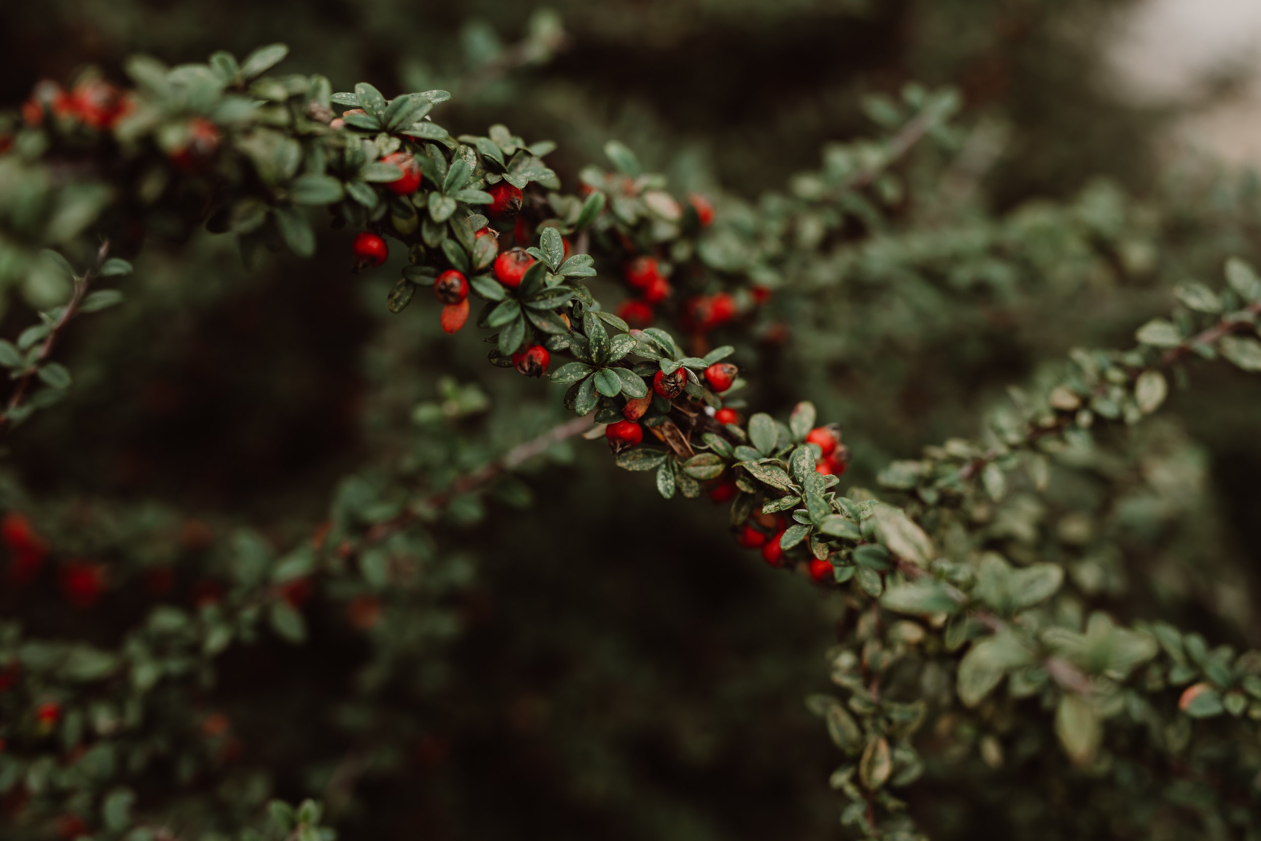 ftworth-botanical-gardens-wedding-M&T (213 of 548).jpg