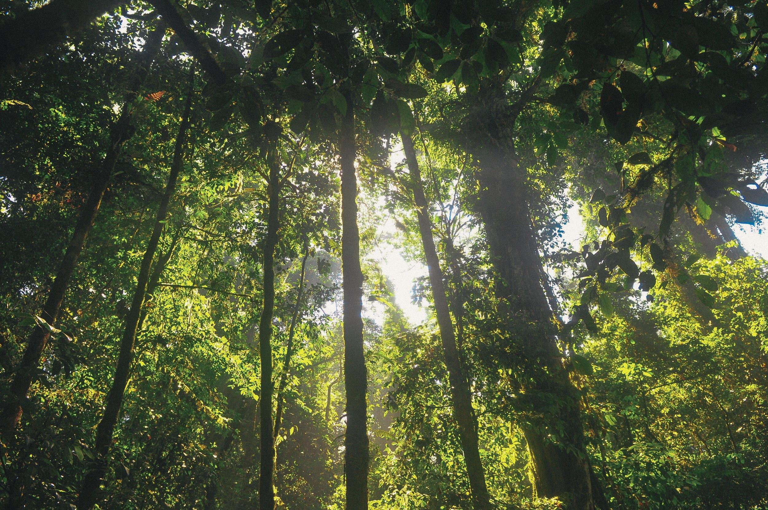 sunny forest.jpg