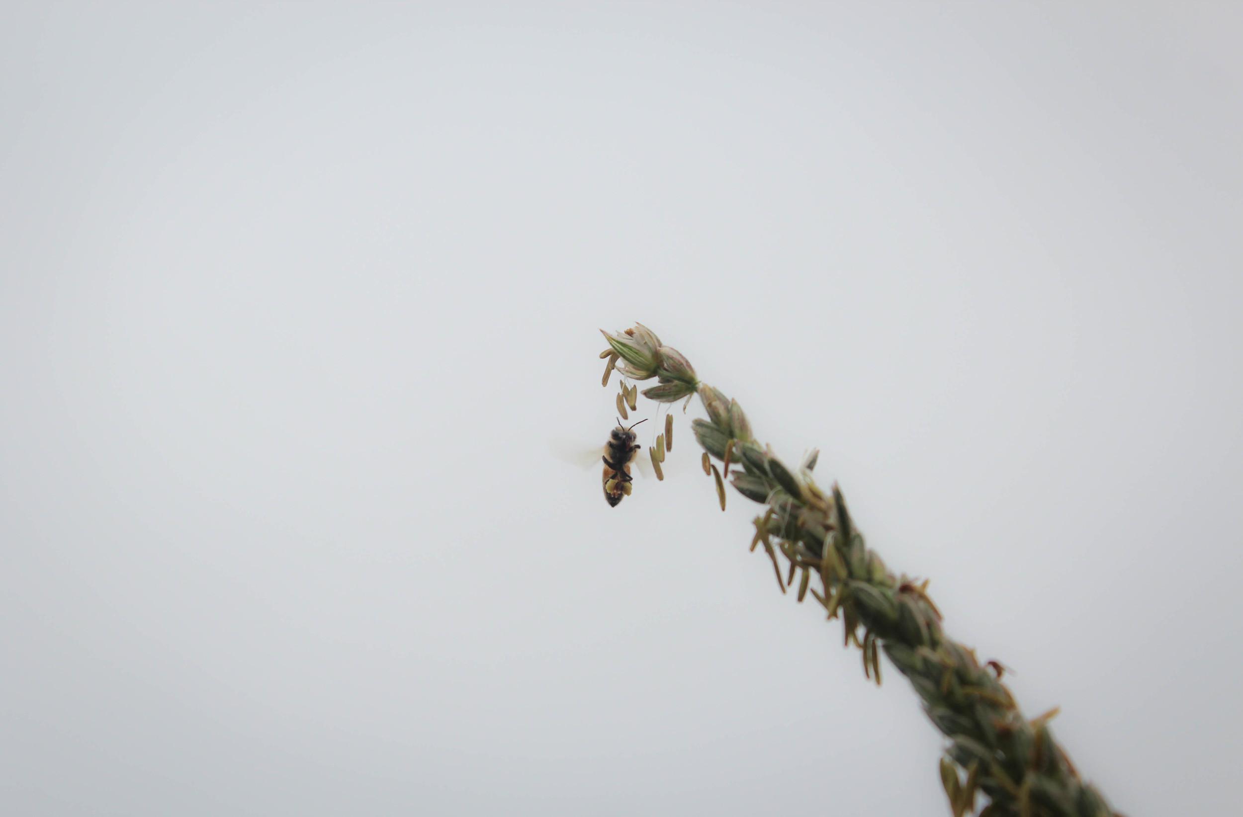 Bee Edit-1.jpg