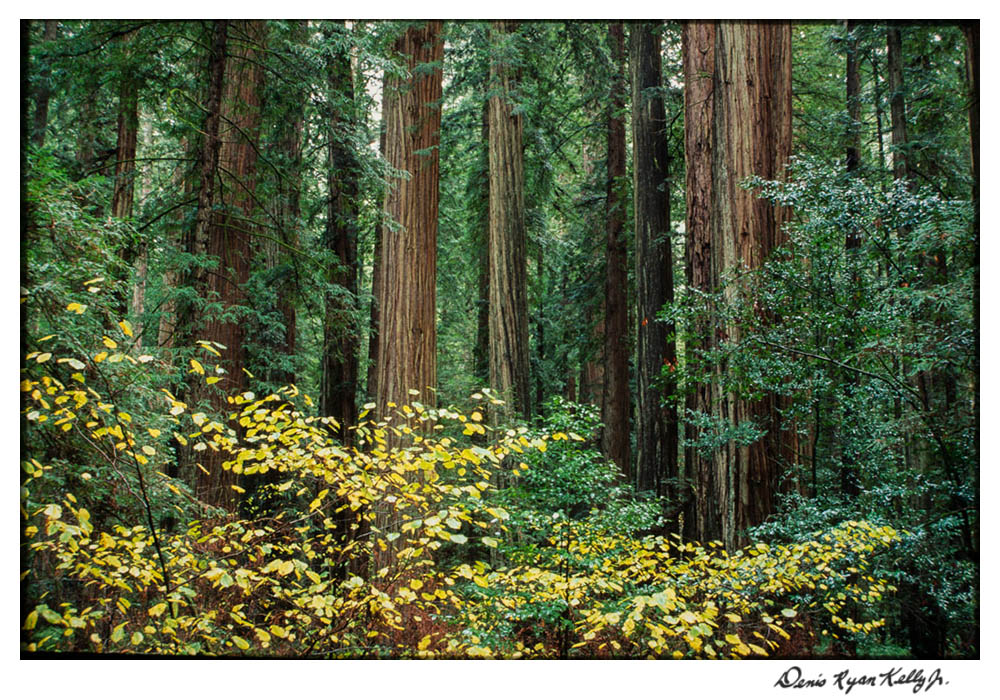 Redwoods with Mary Ann-4.jpg