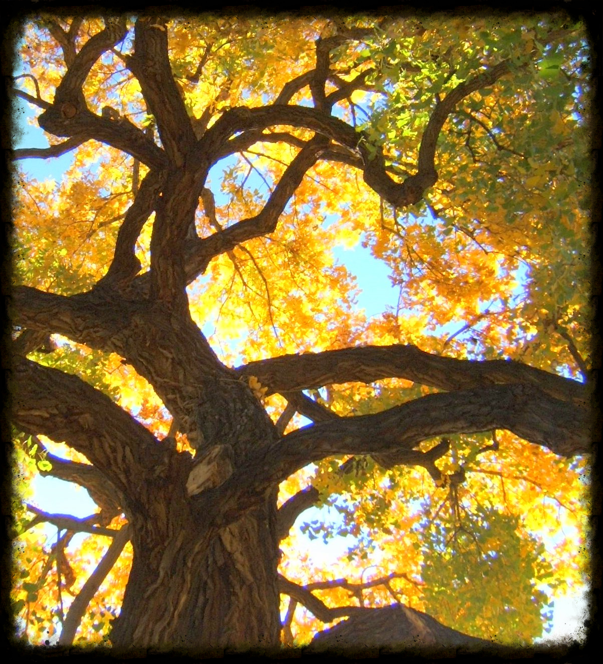 CottonwoodFall.jpg