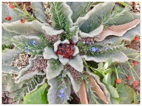 mullein, all dressed up with rosehips, milk thistle seed, rosemary, nettle, reishi, licorice, and thyme