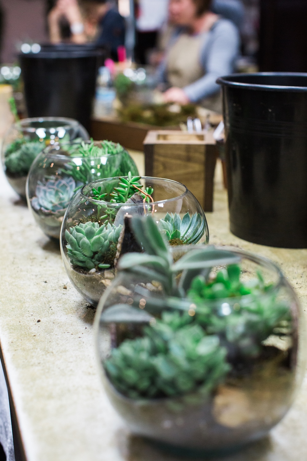 Nov Plant Night-75.jpg