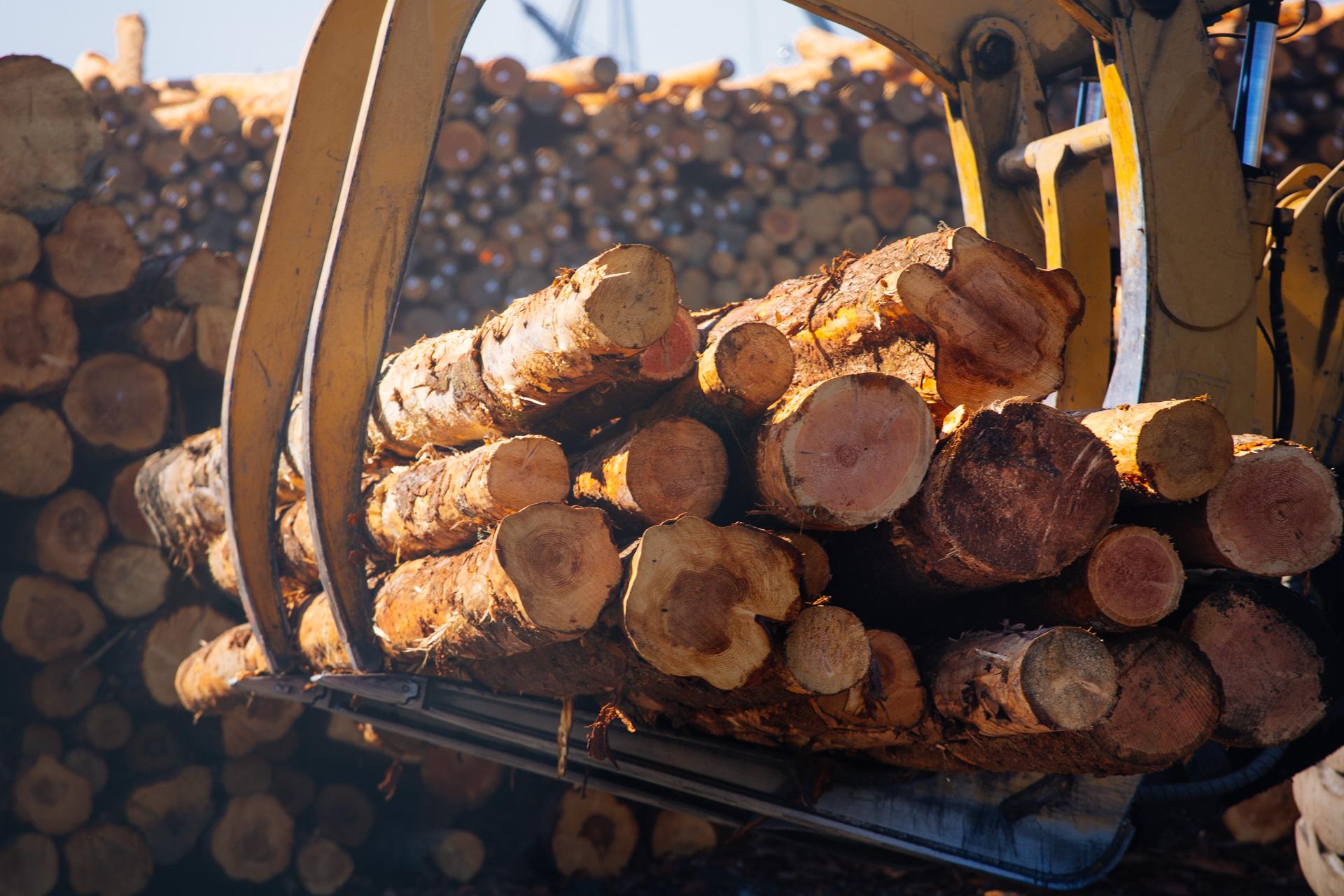 lumberyard-3.jpg