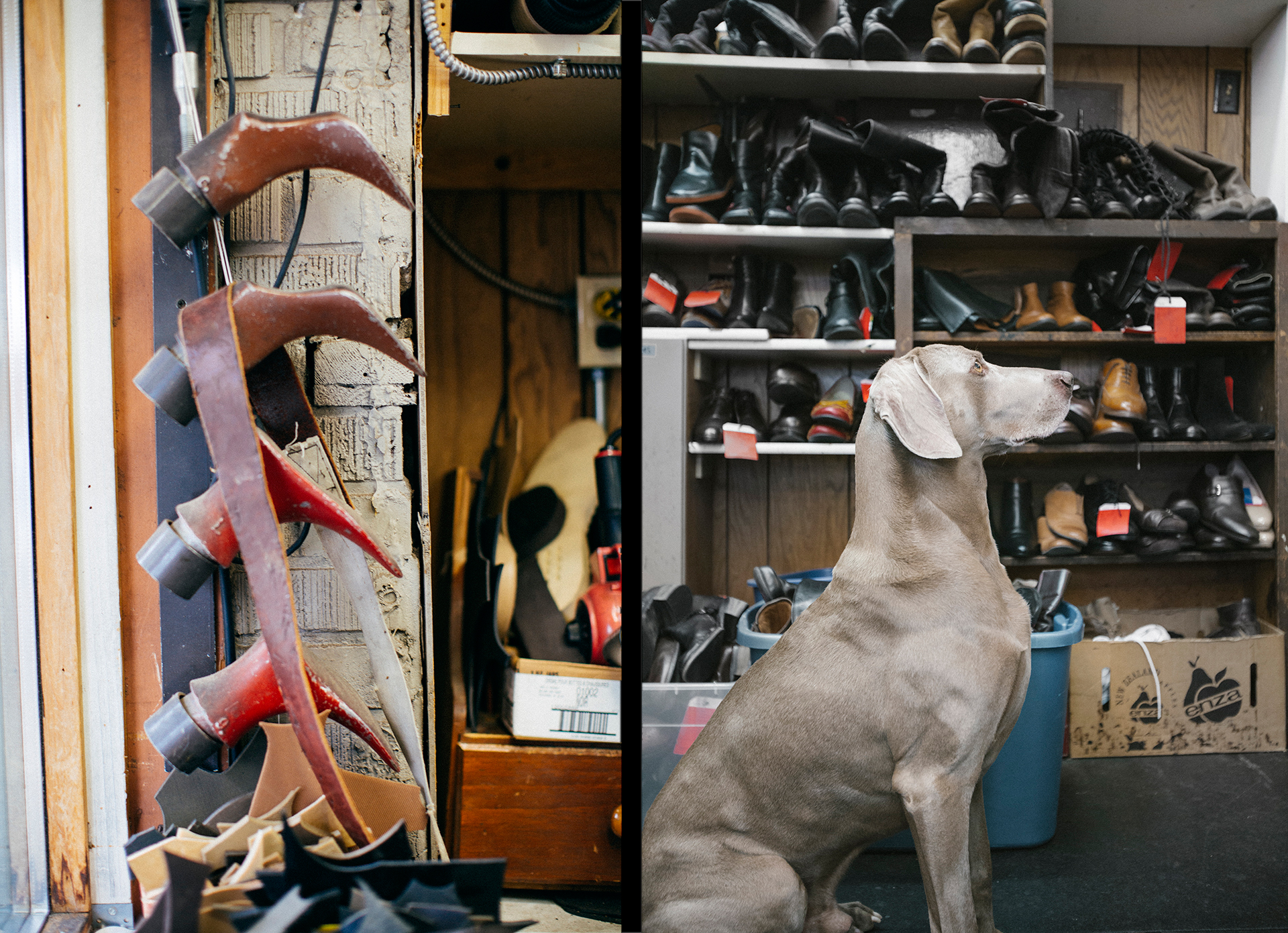 Shoe horns & the shop dog major stand at attention