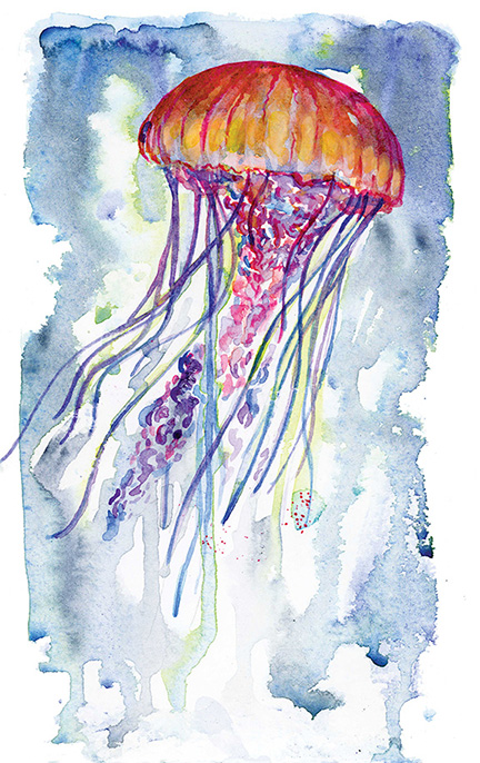 Jelly Fish    Watercolour