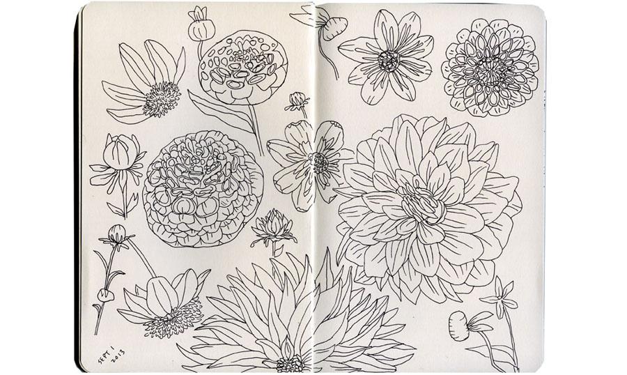 ckeegan_sketchbookflowers2013.jpg