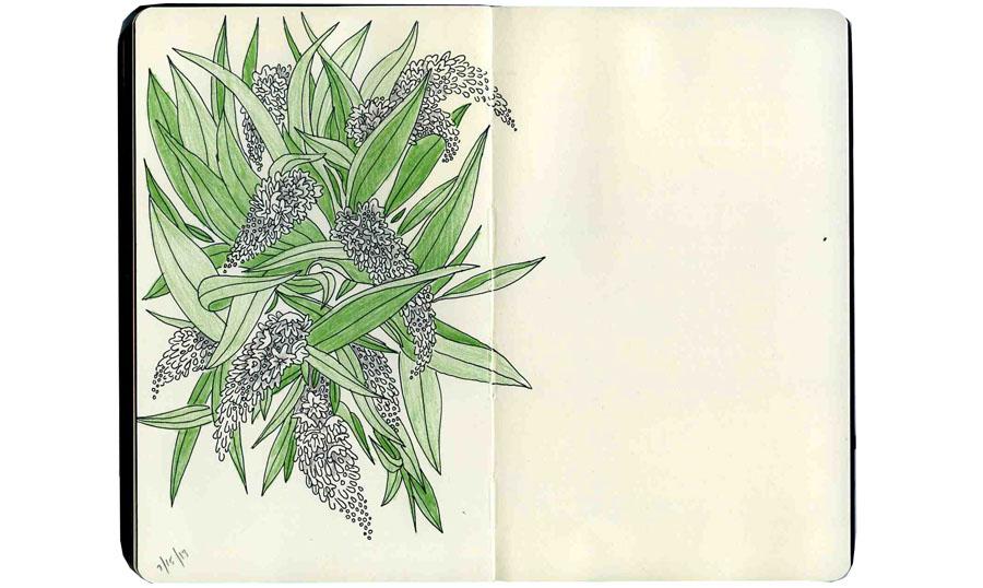 ckeegan_sketchbookflowers2013-2.jpg