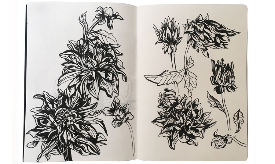 ckeegan_sketchbookpages_dahlias.jpg