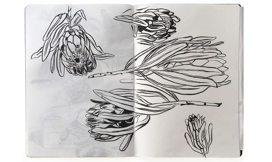 ckeegan_sketchbookpages_protea.jpg