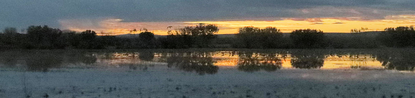 Sandhill Cranes waking up in the ponds at the Bosque del Apache National Wildlife Reserve. (New Mexico)
