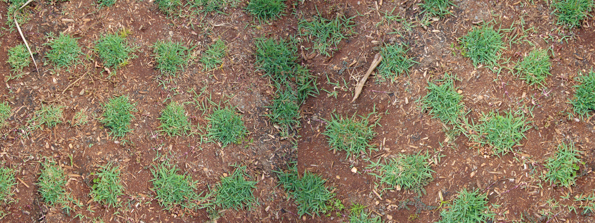 kim-beck-greener-03.jpg