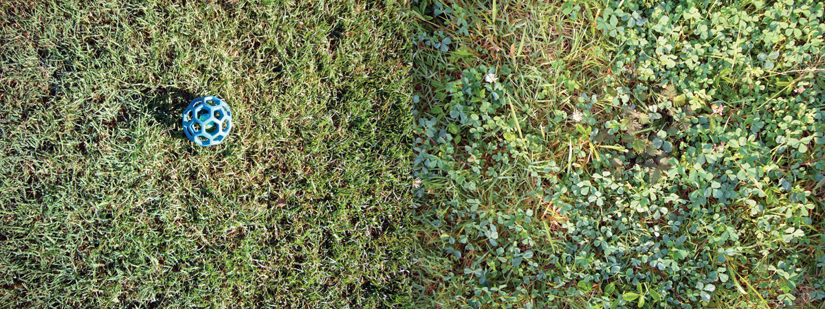 kim-beck-greener-08.jpg