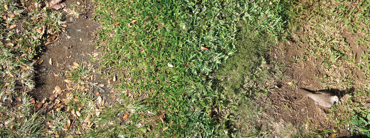 kim-beck-greener-13.jpg