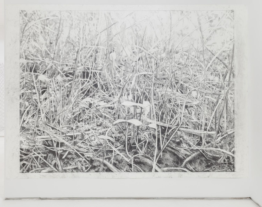 A Great Piece of Turf,  graphite on paper, 78 1/4 x 109 inches,2014