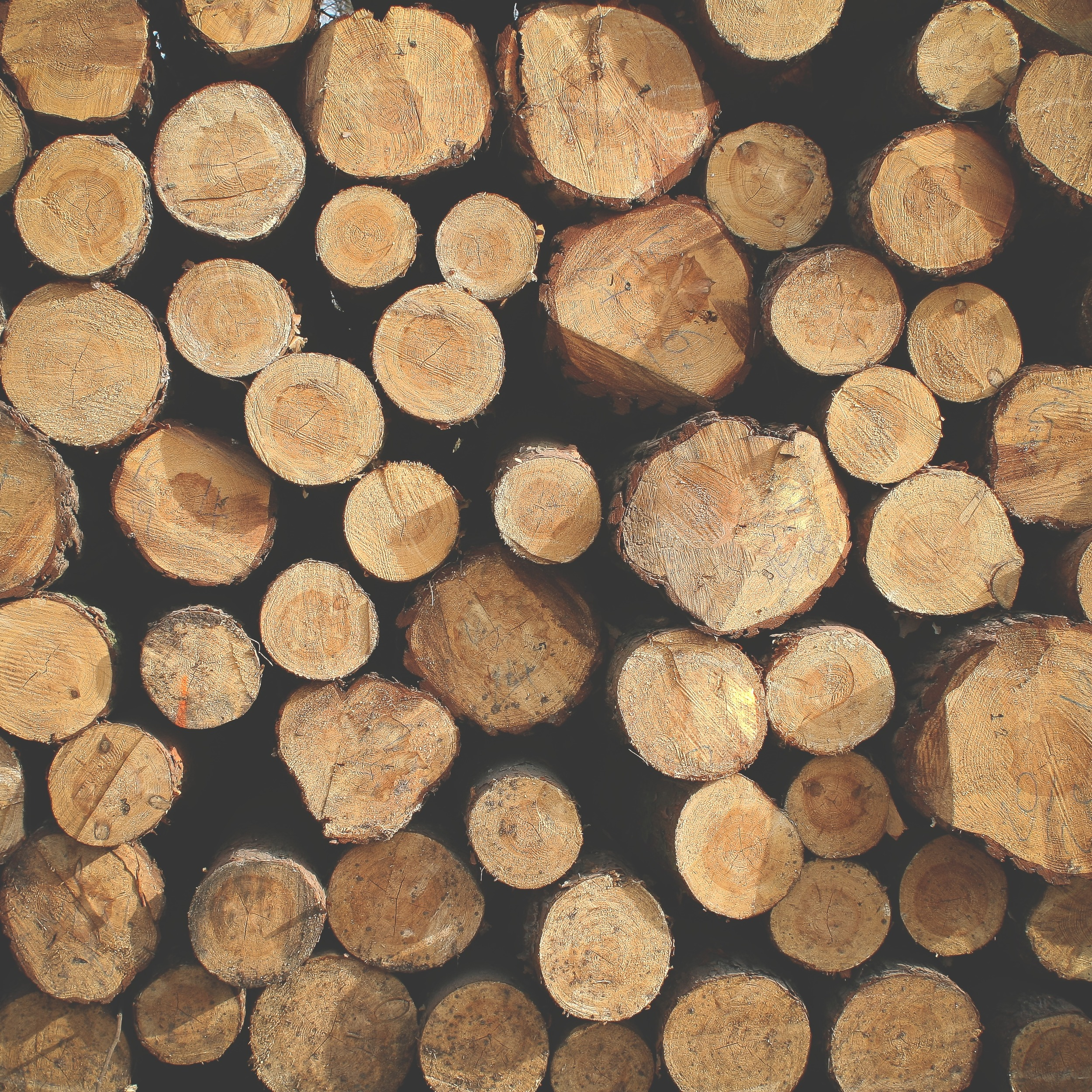 picjumbo.com_IMG_7028.jpg
