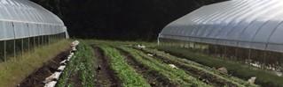 - Massaro Community Farm, Woodbridge(Kip Kolesinskas 2017)