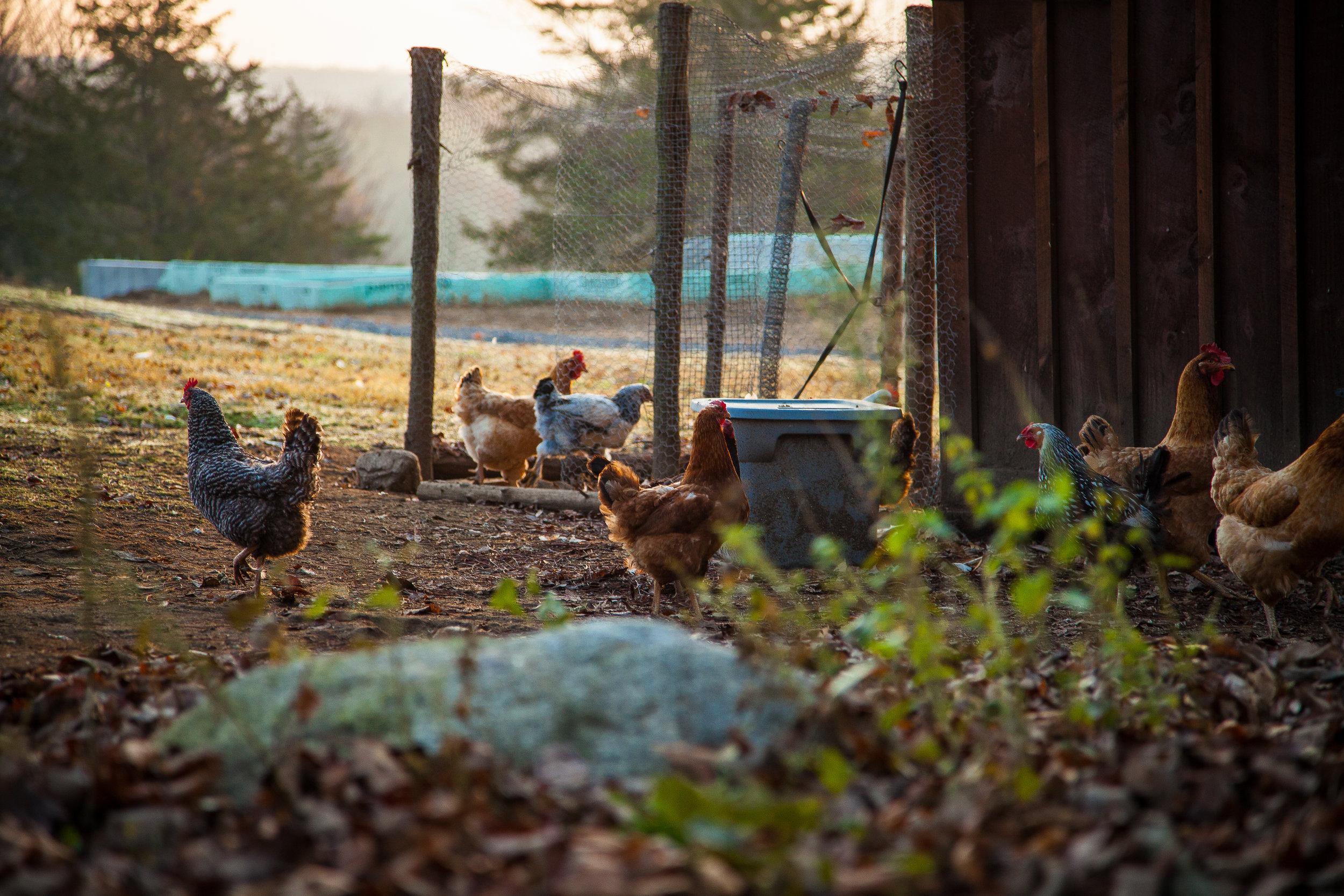 Stoneboat Farm, Lebanon CT (Carla McElroy Photography 2017)
