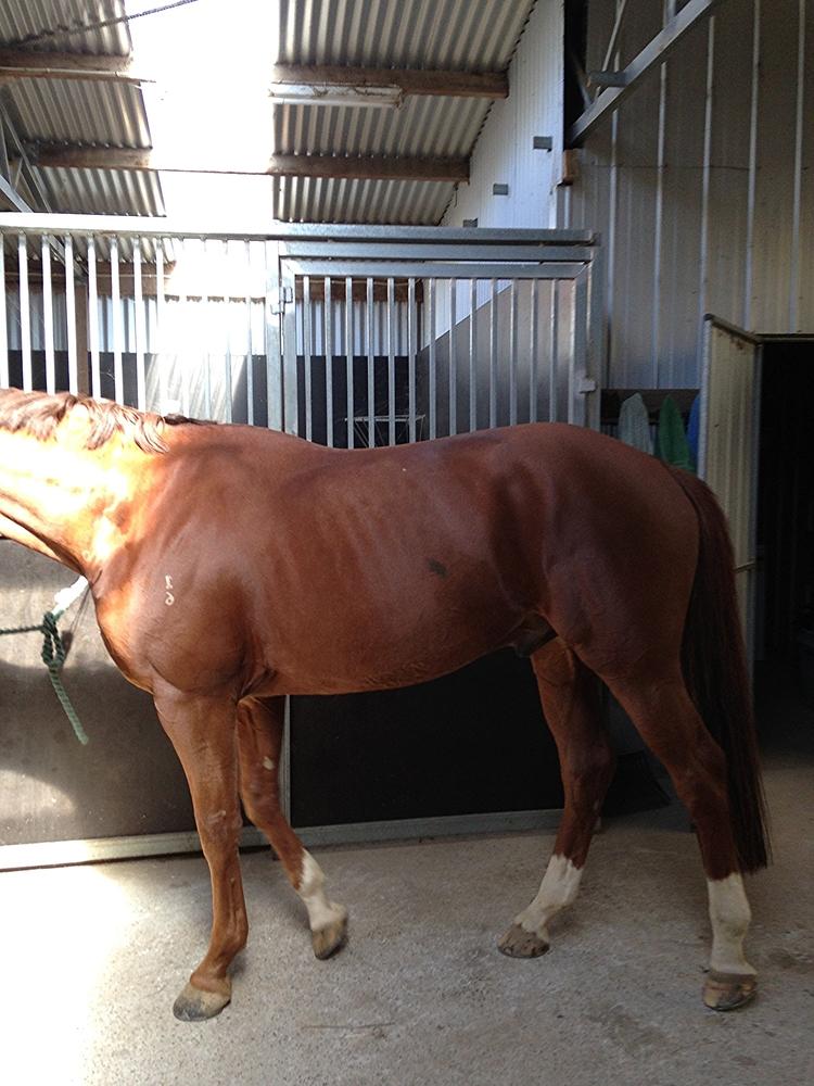 Jenny+Bray+-+Horse+Photo+1.jpg